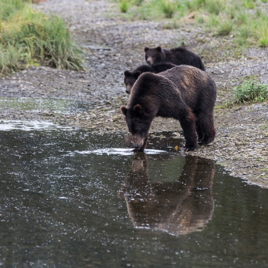 A great reflection of mother bear.