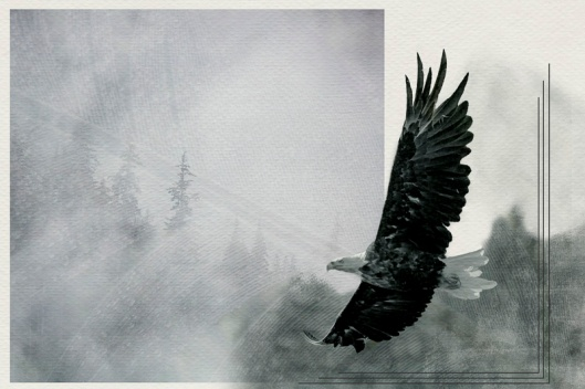 I had  a lot of fun with this image. Adding the spruce trees and a faint eagles feather to the background. Turning it to B&W kept the focus on the eagle.