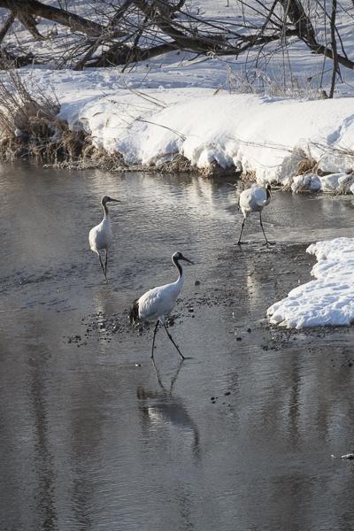 Three cranes.