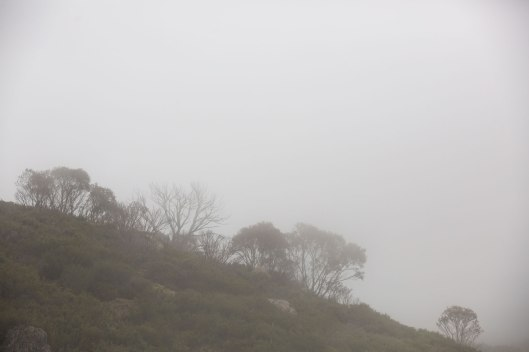 Snowgums break the skyline on this misty morning in the Kosciosko National Park