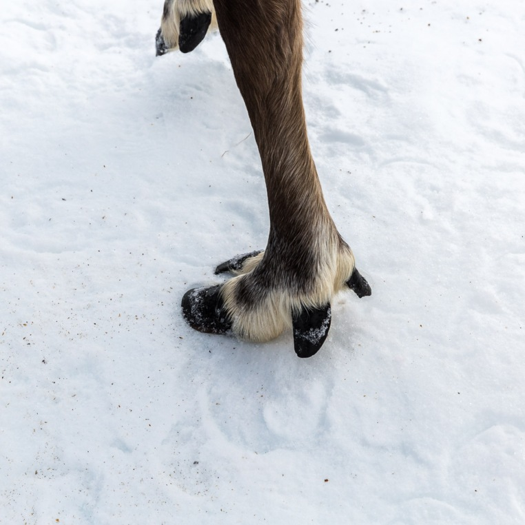 Splayed foot for walking on snow and ice